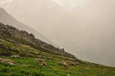 Free Rain Storm In The Italian Alps. Grazing Ibex Stock Images - 26073774