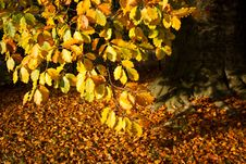Autumn Mood Royalty Free Stock Photo
