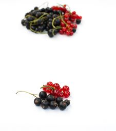Free Red And Black Currant Stock Image - 26080961
