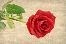 Free Red Rose Flower Royalty Free Stock Photo - 26086325