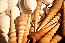 Free Shell Background Stock Photography - 26088062