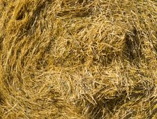 Free Closeup Hay Stock Photo - 26093820