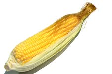 Free Sweet Corns Royalty Free Stock Images - 26099719