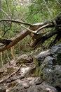 Free Tree Jam Stock Image - 2610401