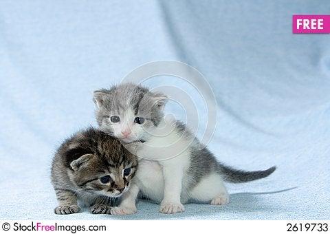 Free Two Kittens Stock Photos - 2619733