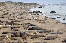 Free Seal Stock Photo - 2610160