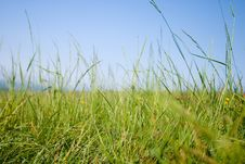 Free Spring Grass Stock Photography - 2610252