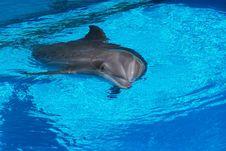 Free Dolphin Stock Photos - 2611053