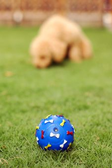 Free Pet Toy Stock Photos - 2612083