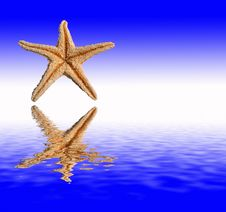 Starfish Reflections Stock Images