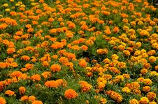 Free Endless Field Of Flowers Stock Images - 2613634