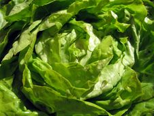Free Salad Stock Photo - 2613960