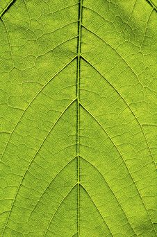 Free Leaf Structure Stock Photography - 2614822