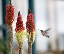 Free Hummingbird Stock Image - 2614901