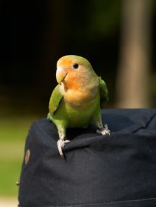 Free Parrot And Hat Royalty Free Stock Photography - 2616117