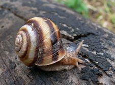 Snail 3 Stock Photography