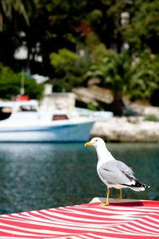 Free Sitting Seagull 2 Royalty Free Stock Photography - 2618597