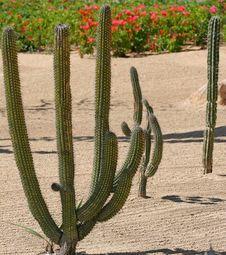 Free Cactus Garden Royalty Free Stock Image - 2619306