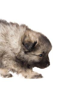 Free Puppy Stock Photo - 2619630