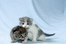 Free Two Kittens Stock Photos - 2619733