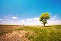 Free Alone Tree Stock Photo - 26101760