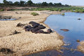 Free Hippos Resting At River&x27;s Edge Royalty Free Stock Photo - 26102545