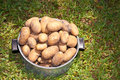 Free Fresh Potatoes Royalty Free Stock Photo - 26108955