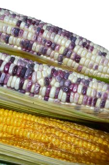 Sweet Corns Stock Photo