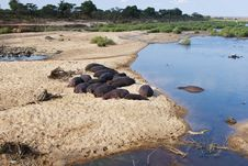 Hippos Resting At River S Edge Royalty Free Stock Photo