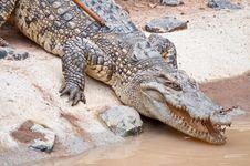 Free A Fresh Water Crocodile Stock Photos - 26107183