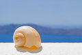 Free A Seashell In The Sun Stock Photos - 26116343