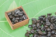 Free Coffee Beans On Green Color Leaf Background Stock Photography - 26112222