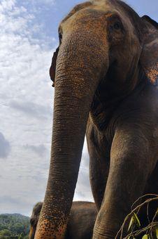 Free Elephant Stock Image - 26118081