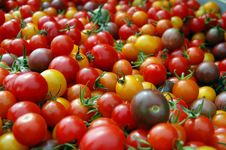 Free Bunch Of Cherry Tomatoes Royalty Free Stock Image - 26118556