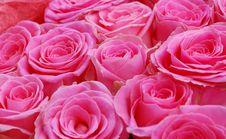 Free Big Bunch Of Red Roses Royalty Free Stock Images - 26119029