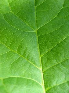 Free Green Background From A Leaf Stock Photography - 26122332