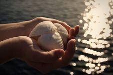 Free Seashells Stock Photography - 26122532