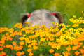 Free Little Girl Behind The Flowers Royalty Free Stock Image - 26134166