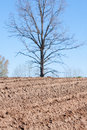Free Plowed Field And Tree Stock Image - 26140471