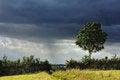 Free Single Tree Royalty Free Stock Photo - 26143795