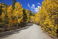 Free Forest Service Road Lined With Aspen Trees Royalty Free Stock Image - 26145126