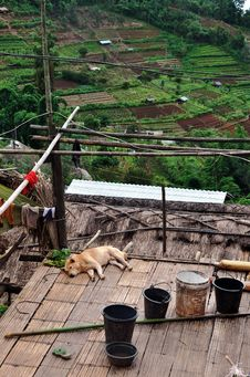 A Rural Dog With Terraced Field Scene Stock Photo