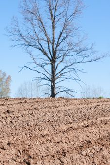 Plowed Field And Tree