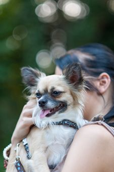 Free A Small Dog III Stock Images - 26141044