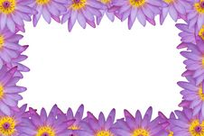Free Violet Pink Lotus Random Border Stock Photography - 26142782