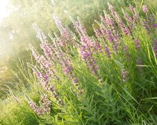 Free Beautiful Meadow Flower Stock Photos - 26143743