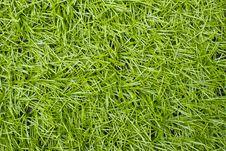 Free Artificial Green Grass Royalty Free Stock Photos - 26144818