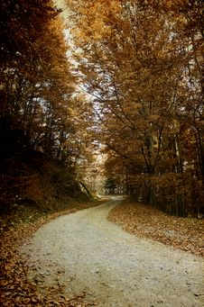 Free Colorful Autumn In The Mountains Royalty Free Stock Photos - 26153698
