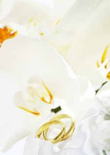 Free Wedding Background Royalty Free Stock Photography - 26153777