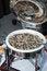 Free Wild Rice Pilaf Stock Image - 26151211